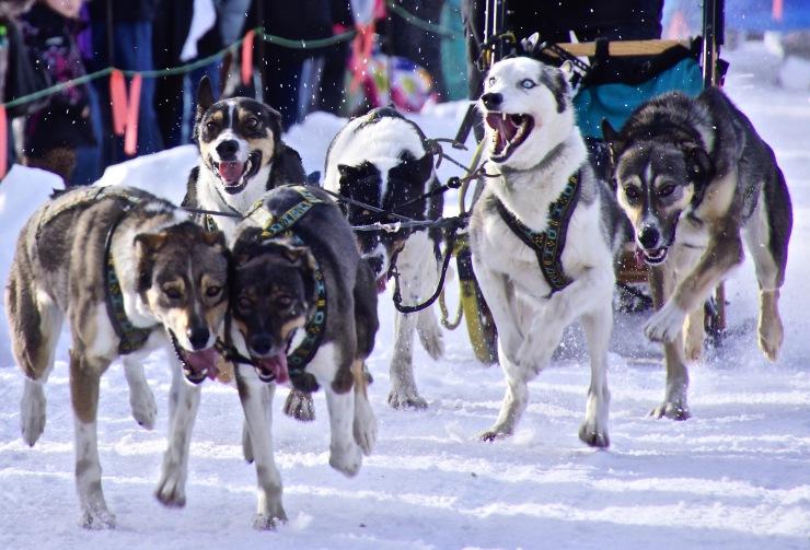 The Ashton Dog Derby Lives On